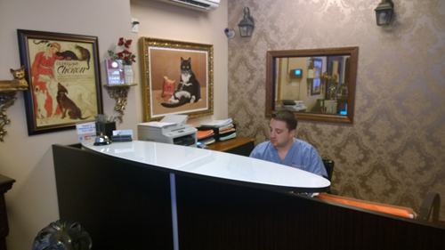 Cat Veterinarian Home